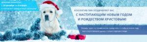 PIK новый год главная 1900х550 300x86 - TM BUDMONSTER